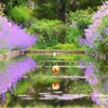 lavender  suiren