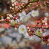 flower7362
