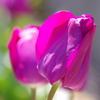 flower7045