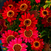 flower1020630