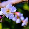 flower7594