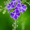 flower1030777