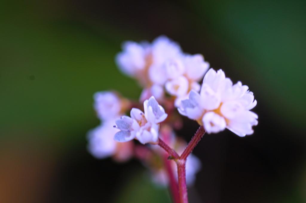 flower7005