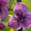 flower7079