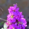 flower7977