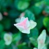 flower1030392