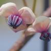 flower7084