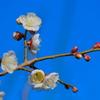 flower7654