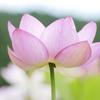 flower1030058