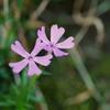 flower1040199