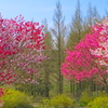 flower8942