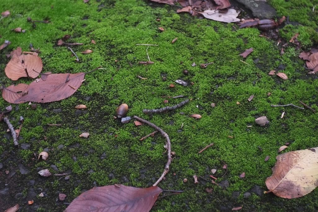 苔とドングリ
