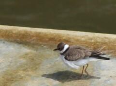 この鳥の名前教えて下さい