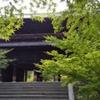 南禅寺 緑のもみじ
