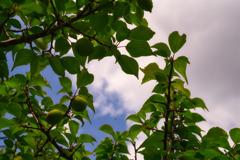 梅の木と蜘蛛