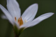 純白な愛 花言葉
