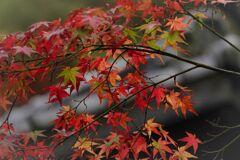 南蔵院の紅葉