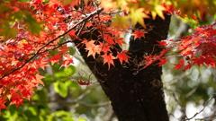 二色の紅葉