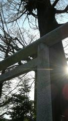 樹(御神木)
