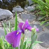 【水辺】池