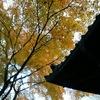 【樹】紅葉