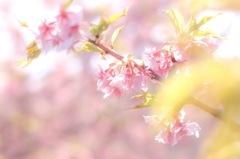 桜前線と共に①