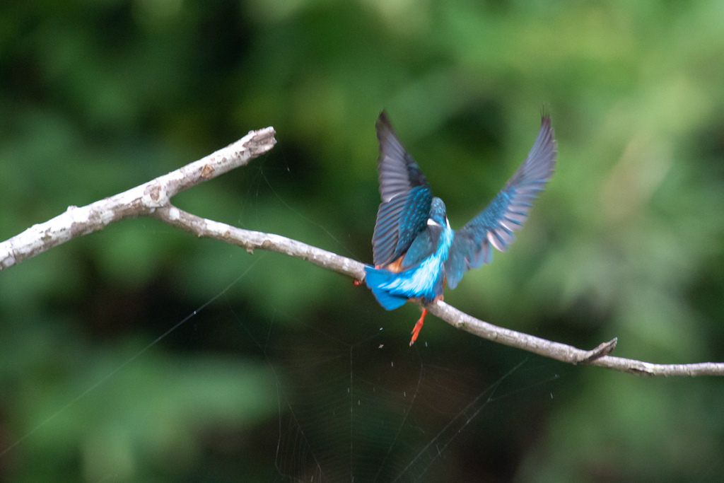 ズルっと、鳥も木から滑る..(^O^)