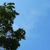 夏空に飛行機。