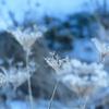 冬の河川敷
