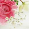 お花の定期便2