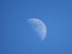 上弦の月。