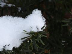 ふんわりした雪