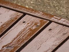 今日は小雨混じりで寒い日じゃ!