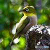野山の鳥 231