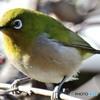 野山の鳥  149