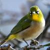 野山の鳥  21-289
