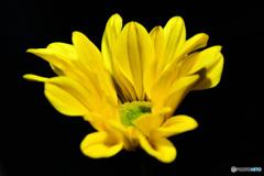 庭に咲いた花  21-570