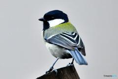 野山の鳥     21-291