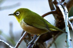野山の鳥   384