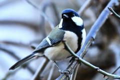野山の鳥  21-261