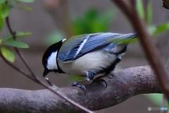 野山の鳥   21-229