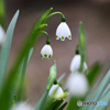 春に咲いた花  21-547