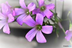 庭に咲いた花  21-575