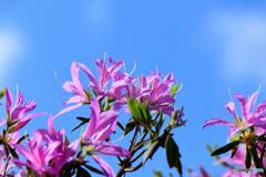 春に咲いた花  21-580
