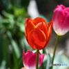 庭に咲いた春の花   21-182