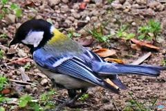 野山の鳥  四十雀さん  21-324