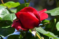 庭に咲いた花  21-627