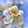 春の花  21-045