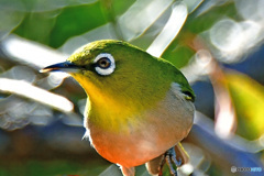 野山の鳥  21-306