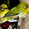 野山の鳥  363